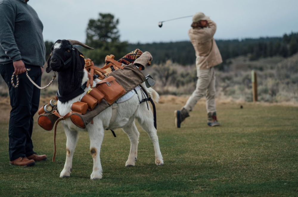 Goats For Caddies?  Oregon's Got Some