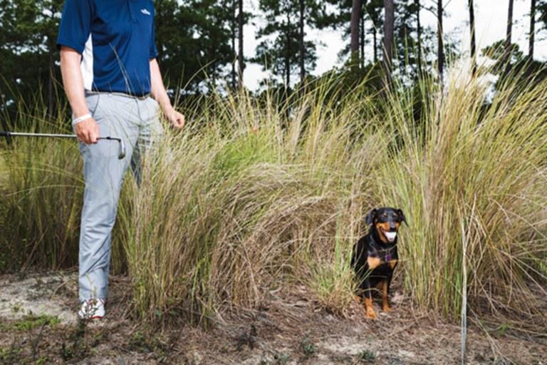 Dogs Will Retrieve Stray Mickelson Tee Shots?