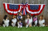 Happy Day-After Fourth From Fireworks-Weary Dogs