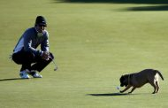 Dog-Gone Dog Friendly At The Dunhill Links
