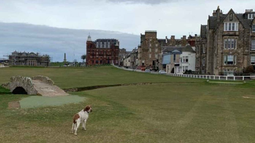The Old Course -- Now It's One Massive Dog Park?