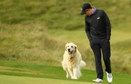 Rory McIlroy Chucks His 3-Wood;  Dogs Volunteer To Search