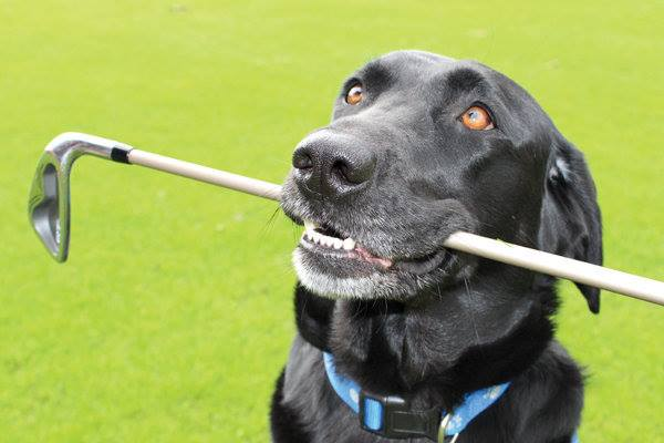 Putter-Abusing Viktor Hovland Heads For Our Dog House!